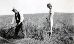 Hertha høster korn